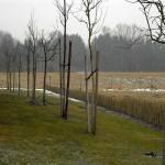 Gerüstbau und Bäume