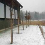 Gerüstbauer und Bäume