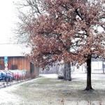 Gerüstverleih und Bäume